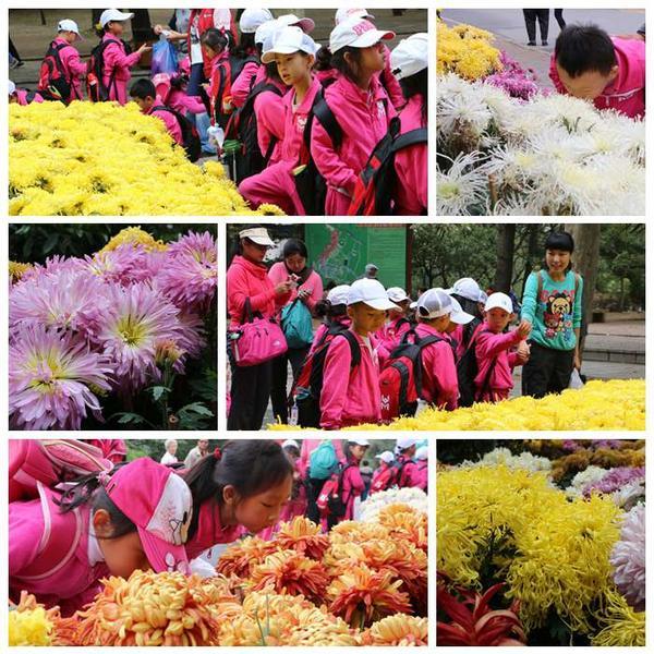 大自然课程系列-赏菊